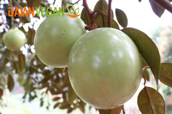 www.123raovat.com: Vú sữa Lò Rèn Đại An Vegan